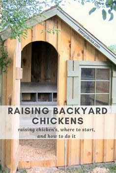 The sound of a rooster crowing at dawn; delicious, farm fresh eggs for breakfast; pest control; these are just a few of the benefits of raising backyard chickens. In a fairly small amount of space and with very few supplies, you can easily start a backyard flock of your own. Chickens are very easy to …