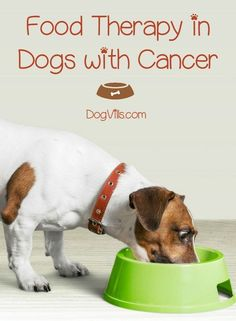 Food therapy can give your dog an edge in his fight against cancer. Although it's not a magic bullet, food therapy can help with your dog's overall health.