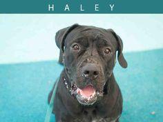 Haley (A652904)