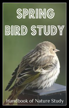 Ch 2: Try this! Bird Songs (Pg 42-43 of the Handbook of Nature Study & link within post to All About Birds website for songs & videos of 600 common birds)