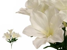 $18.99 for 60 lilies. This Easter lily, also known as November lily, bears 6 trumpet shaped, snow white, and outward facing flowers along with green leaves on the stem and ivory stamen in the middle of each flower.  The beautiful lilies symbolize purity, virtue, innocence, hope and life spiritual essence of Easter.  Our Easter lily bouquet is good for any occasions and events.  Decorate them for your weddings, parties, church, home and gardens.