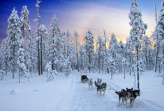 What can you do when it's winter in Finland? Check out our list of exciting things to see and do on your Finnish winter holiday. Week End En Amoureux, Destinations, Runners World, Wonderful Places, Amazing Places, Winter Holidays, Alps, Best Dogs, Amazing Photography