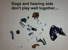 Make sure to keep your hearing aids safe from pets!