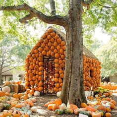 Too many pumpkins? In awe and admiration of the pumpkin cabin at harvest Happy pumpkin picking! Happy Pumpkin, A Pumpkin, Pumpkin House, October Country, Pumpkin Picking, Tennessee Vacation, Nashville Tennessee, Autumn Day, Winter