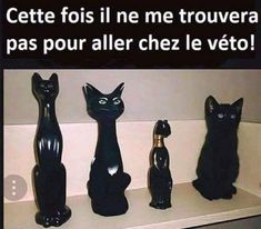 Haha yes bonne planque Funny Animal Pictures, Funny Animals, Cute Animals, I Love Cats, Cute Cats, Tierischer Humor, Magic Cat, Funny Cat Memes, Funny Moments