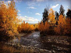 Autumn Scenery, Autumn Trees, Autumn Leaves, Fall Pictures, Love Pictures, Beautiful Pictures, Beautiful Places, Beautiful Scenery, Autumn Cozy
