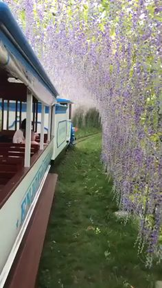Science Discover Ashikaga Flower Park in Japan! Ashikaga Flower Park in Japan! Places Around The World The Places Youll Go Places To See Around The Worlds Vacation Places Dream Vacations Vacation Spots Jamaica Vacation Vacation Destinations Places Around The World, The Places Youll Go, Travel Around The World, Cool Places To Visit, Vacation Places, Dream Vacations, Vacation Spots, Jamaica Vacation, Vacation Ideas