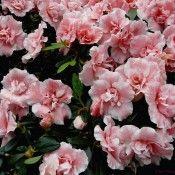 Beautiful Flowers Wallpapres