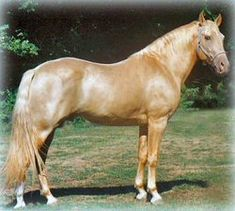 My Business - CHBOA Approved Stallions