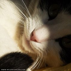 Good morning =] #cat
