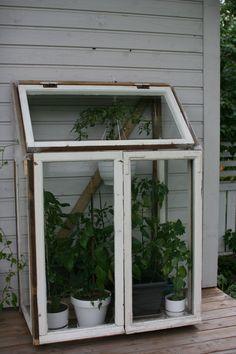 MEILLÄ KOTONA SUOSITTELEE Vanhoista ikkunoista tehty kasvihuone