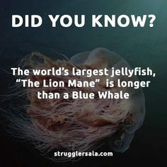 Struggle Facts, Quotes, Wallpapers and Stories Interesting Science Facts, Interesting Facts About World, Random Science Facts, Some Amazing Facts, Unbelievable Facts, Amazing Facts For Students, Wow Facts, Real Facts, Facts You Didnt Know