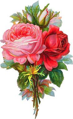 цветы1 - Лада - Webové albumy programu Picasa