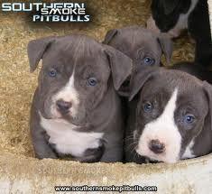So cute I want one