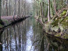 Im Stikelkamper Wald, Ostfriesland