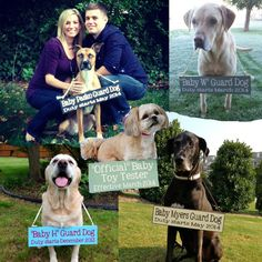 Personalized Pregnancy Announcement Sign   Baby Guard Dogs!
