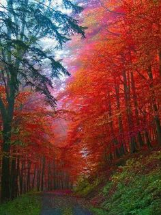 Germany. Autumn forest in Saxony
