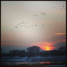 Winter sunset in Holland. Winter Sunset, Netherlands, Holland, Amsterdam, Celestial, Orange, Photography, Outdoor, Instagram