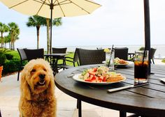 Lunch on St. Simons is better with your bestie by your side! Four Legged, Georgia, Pup, Lunch, Explore, Dogs, Travel, Trips, Dog Baby