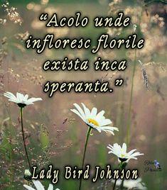 Quotes, Life, Lavender, Quotations, Quote, Shut Up Quotes