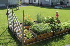 kasvimaa,puulaatikot,kukkapenkki,kukat,kesä