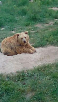 A grzzliy bear!