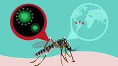 """La ciencia receta """"tranquilidad"""" ante el brote de zika"""