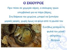 Winter Art, Animal Crafts, Holidays And Events, Kindergarten, Arts And Crafts, Seasons, Education, School, Animals