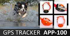 #kutya #vadászkutya #vadászat #hunter #hunting #huntingdog #kutya #dog #gps #nyomkövetés