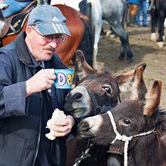 Dining with Donkeys. Ballinasloe, Co. Galway.     Courtesy: Dick Keely, Limerick (Ireland).