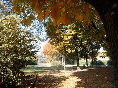 Sotto gli alberi