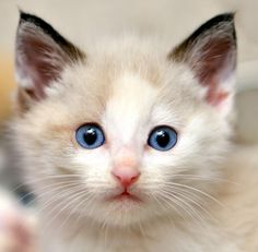 Are you busy?  Too busy for me? I thought no one could not be to be with this cute stuff adorable little blue eyed me.