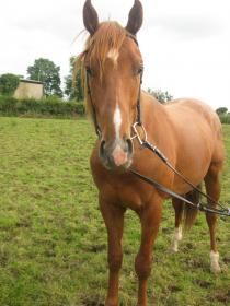 Exciting Flat Namid Colt For Sale From Winning Family Horses For Sale, Horse Sales, Flat, Animals, Content, Bass, Animales, Animaux, Animal