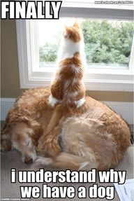 Funny Animals, Funny Cats, Dog Cat, Cats And Dogs, Adorable Animal Funny Animal Pictures, Funny Animals, Cute Animals, Dog Pictures, Funny Photos, Funniest Animals, Funny Images, Animal Fun, Animals Dog