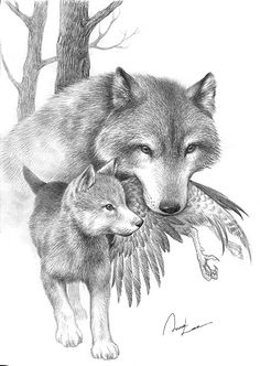 I love this sketch... Reminds me why I love wolves so much...