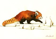 Red panda. Frame and mat not included, just the print. A reproduction of my original painting. These high quality prints are printed with a fine art printing process on a 250 g/m2 high quality thick paper. All prints included a white border (approximately 0.2 in. / 3 mm on all sides) to allow for framing. Print will come signed and dated by the Artist and packed in a clear cello sleeve with cardboard to avoid bending in transit. Have an amazing day! Juan Bosco - San Martin...