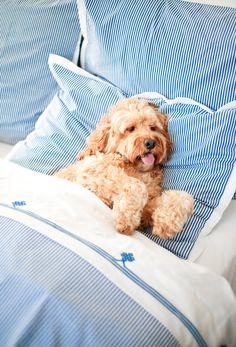 Soft sheets, happy pup | Oxford Stripe Duvet Cover and Gobi Embroidered Sheet Set via Serena & Lily | Image via Mackenzie Horan of Design Darling