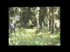 A Close Look: Blue Mountains Paul Freeman Bigfoot Footage Bigfoot Video, Bigfoot News, Bigfoot Sasquatch, Mythological Creatures, Mythical Creatures, Recent Bigfoot Sightings, Bigfoot Footage, Bigfoot Encounters, Lago Ness