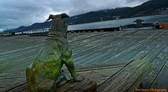 Patsy Ann...Patsy Ann was Juneau's canine gal about town in the 1930s, and was the town's herald. Although deaf from birth Patsy Ann somehow 'heard' the whistles of approaching ships and immediately headed at a fast trot for the wharf, not to be sidetracked for any reason. 'The ship is coming! Mail! Tourists! Packages!' The citizens of Juneau followed behind her when they saw her heading for the harbor -Tom Pauser photo, Juneau, Alaska - May 5, 2013