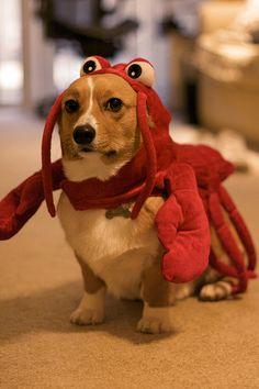 Lobster dog.