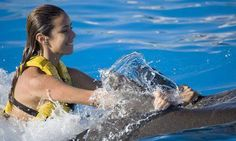 Where to swim with the dolphins