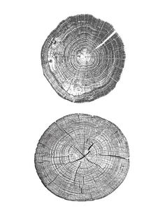 Tree Ring Print. 8.5inch X 11inch  ♥♥♥♥♥♥♥♥♥♥♥♥♥♥♥ You are purchasing a digital file only ♥♥♥♥♥♥♥♥♥♥♥♥♥♥♥  THIS IS AN INSTANT DOWNLOAD  - Instant download - Print and Frame it yourself - No waiting, no shipping fees  ♥♥♥♥♥♥♥♥♥♥♥♥♥♥♥♥♥♥♥♥♥♥♥♥♥♥♥  WHAT YOU GET  -Files are 300 dpi, excellent quality for printing - 2 Files: JPEG and PDF - A4 Dimensions: (8.5inch X 11inch), which is the standard size of paper for you home printer. - If you would prefer to have the artwork in a different size…