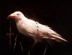 Albino crow by Damien Worm