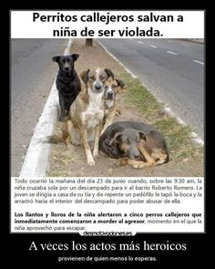 Street little dogs save girl of being violated If you speak english you need to translate. Animals And Pets, Baby Animals, Cute Animals, Cute Puppies, Cute Dogs, Stop Animal Cruelty, Mundo Animal, Stray Dog, Little Dogs