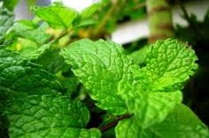Mint Mint Mint is a powerful herb that can help restore vibrant skin. Mint contains salicylic acid, which a natural acne fighting compound. Mint also has Vitamin A which regulates oiliness. Mojito, How To Help Nausea, Coriander Seeds, Fennel Seeds, Mediterranean Garden, Nutrition, World Of Color, Natural Solutions, Healthier You
