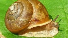 How Long Does a Snail Sleep? Here's The Answers and Amazing Facts About Snails