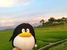#throw photos of our #sabah trip  . .  . . . . . . . #plushiesofinstagram #softtoy #stuffedtoy #softtoys #plushies #instapic #cutenessoverload #toyphotography #stuffedanimals #plushtoys #plushtoy #penguinstagram #penguinlove #penguinsofinstagram #pinguin #ka7j0d1 #pictureoftheday #photowall #instaday #instaphotos #photographyeveryday #photographylovers #discovering #exploring #instadaily #instapicture #instacute #stuffiesofinstagram