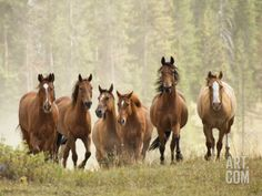 Horses on Ranch in Montana During Roundup Photographic Print by Adam Jones at Art.com