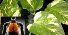 O segredo para purificar o ar de sua casa está nesta planta