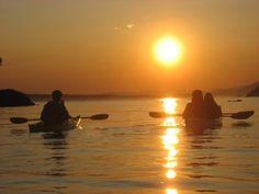 Visiting San Juan Island? Experience the beauty and wildlife of San Juan up close with a kayaking tour.